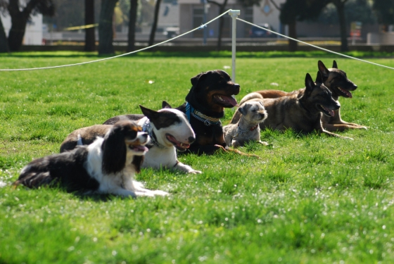 monday_dog_training_in_long_beach_2-7-11_0721