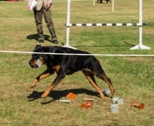Top Dog 2013-15